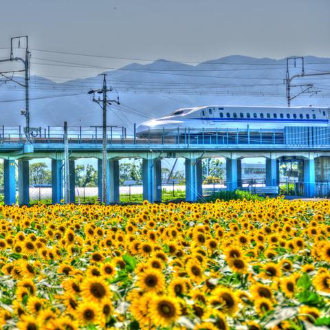 2017_09_03_sunflower_004.jpg